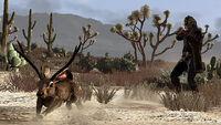Huntingtrading jackalope.jpg