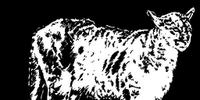 Cougar Pelt