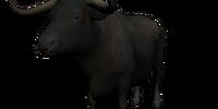 Super Bull