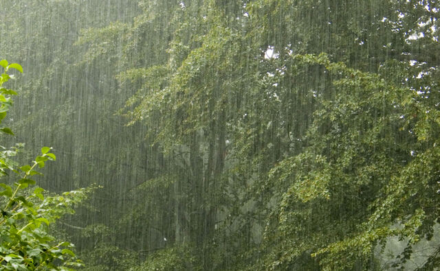 File:Rain24-hours.jpg