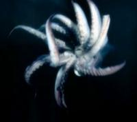 BTE-Squid