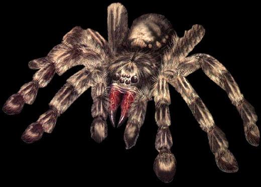 File:Large Spider - Darkside Chronicles.jpg