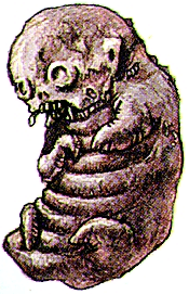 File:Chimera newborn.png