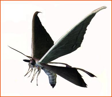 File:Mothcv ene.jpg
