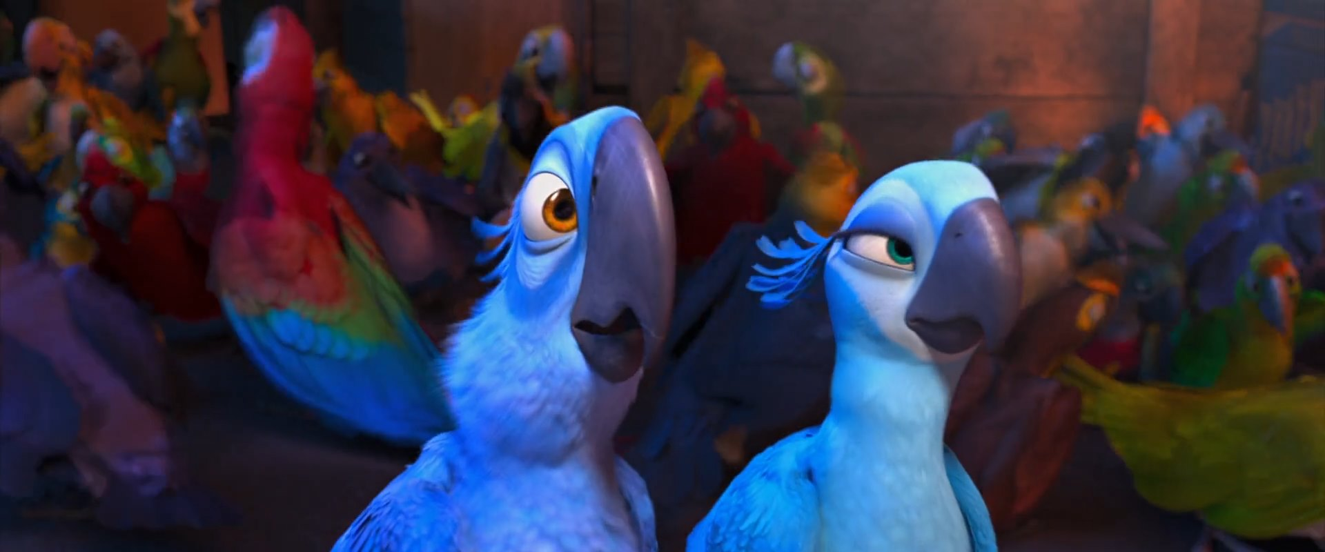blue parrot gay movie