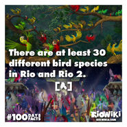 Rio-Wiki-100Days100Facts-074