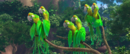 Real in Rio parrots