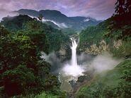 Amazonrainforest