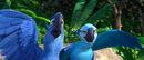 Rio-rio-the-movie-27375355-850-363