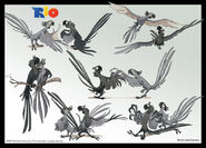 Rio blue sky model sheet 9