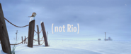 Not rio