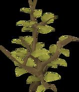 Neverberry ravaged
