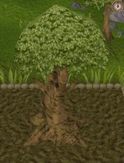 Spirit tree9