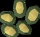 Lycopus seed detail