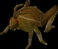 Scabaras locust