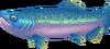 Salmon (Aquarium)