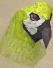 Parrot chathead