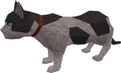 Overgrown cat (white and black) pet
