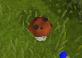 Player mushroom