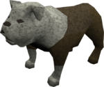 Bulldog (white) pet