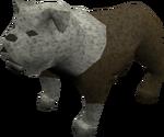 Bulldog (white) pet