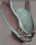 Sentinel Gorthaur chathead