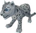 Snow leopard cub pet.png
