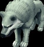 Wolf25