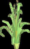 Fever grass detail