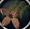 Livid plant bunch detail