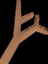 Branch detail