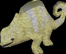 Adult chameleon (desert)