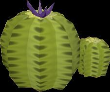 Cactus old
