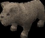 Bulldog puppy (grey) pet