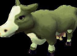 Plague cow