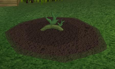 Vine herbs3