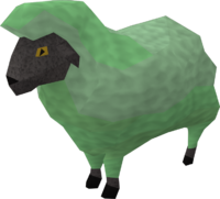 Sick looking sheep 2
