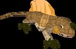 Reptile detail