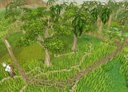 Hardwood grove