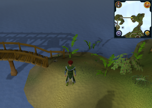 Compass clue Yanille north of Hazelmere's island