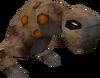 Spotted kebbit detail