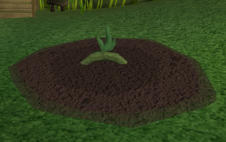 Vine herbs2