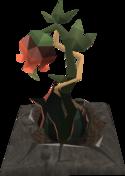 Rosebloodplant