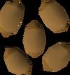 Calquat tree seed detail