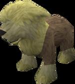 Sheepdog puppy (yellow) pet