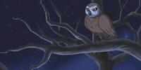 Owl (Scooby-Doo! Shaggy's Showdown)