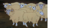 Sheep (Scooby Roo)