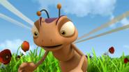 Dragonfly Express (MTB)