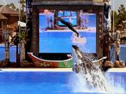 3x2 Sean and whale jump
