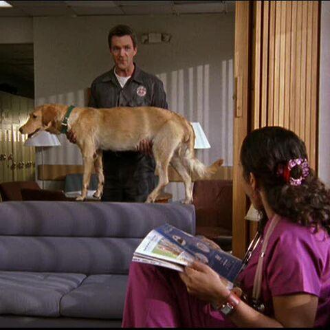 Scrubs - It's a Ghost Dog!!! - YouTube